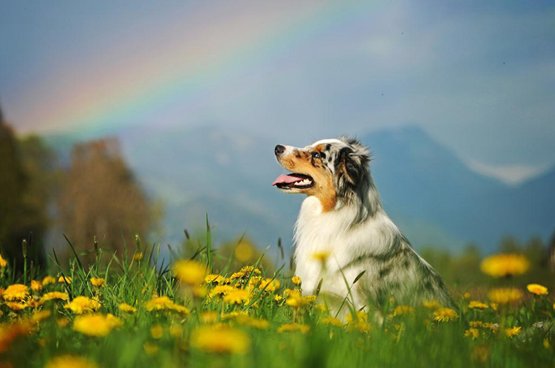 cani bellissimi