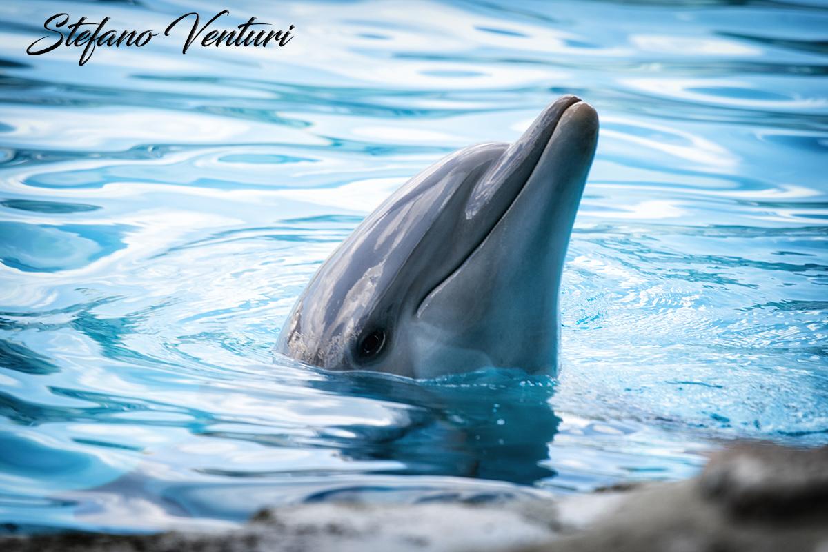 delfino sorridente