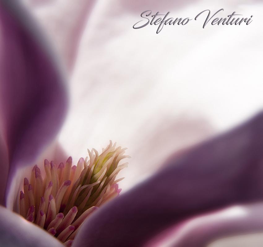 cuore di un fiore