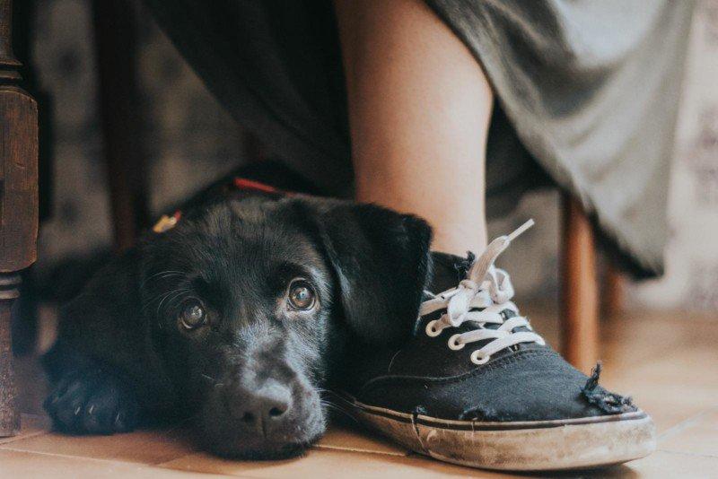 foto di cani