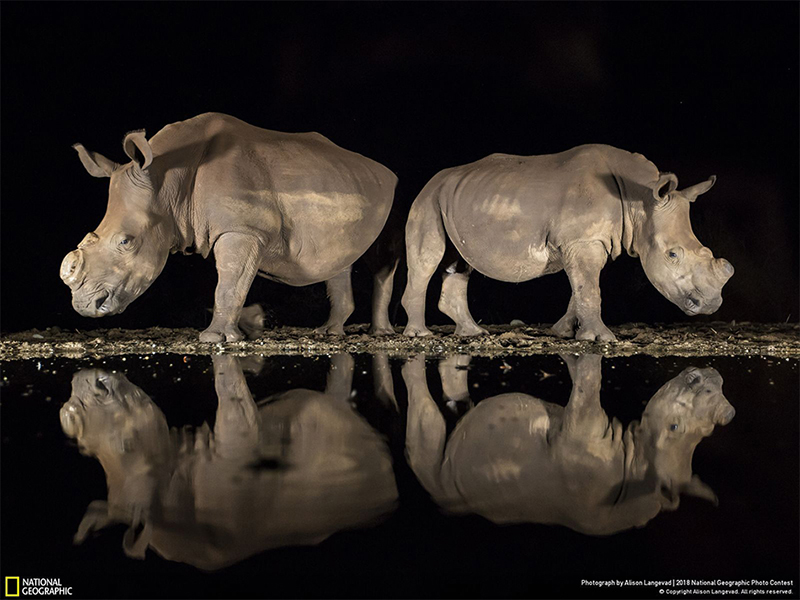 National Geographic Photo Contest 2018