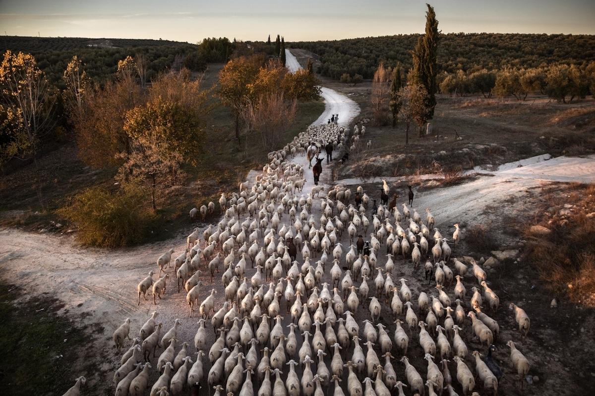 Siena International Photo Awards 2019