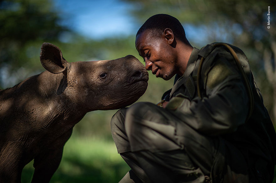 Wildlife Photography Award