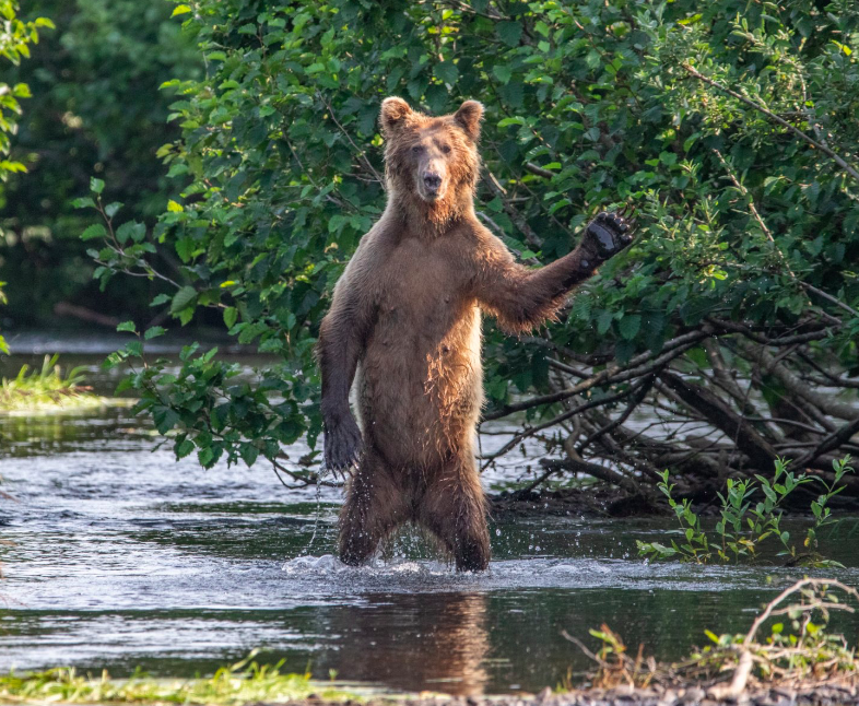 comedy wildlife photo awards 2020